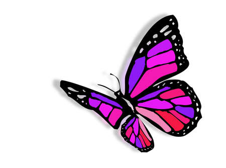 A very colorful butterfly as symbol of spring