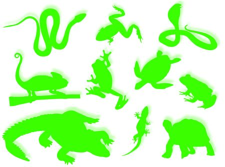Reptiles and amphibians in different poses and attitudes photo