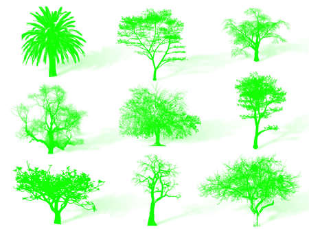 Trees silhouettes to represent different species in nature photo