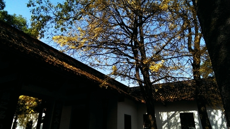 the humanities landscape: Yuelu Academy