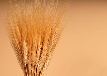 shafts: Wellen von Weizen gegen tg Hintergrund  Lizenzfreie Bilder