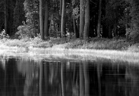 yosemite: Black and white image showing the trees and foliage reflecting into a Yosemite pond