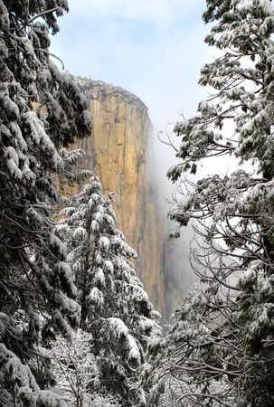 el capitan: View through the pines of El Capitan in Yosemite National Park on a winter morning