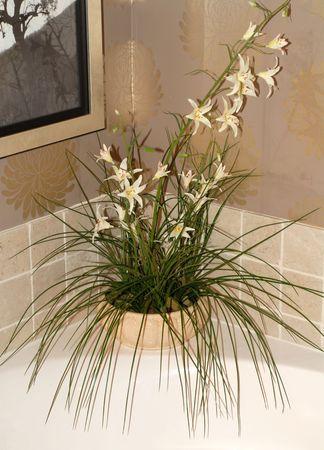 flowering plant: Fioritura di piante di riposo su una vasca sporgenza