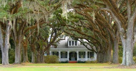 wealthy lifestyle: Una stradina alberata che conduce alla casa meridionale a sfondo  Archivio Fotografico