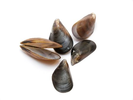 cockleshells: Some cockleshells of sea molluscs - mussels