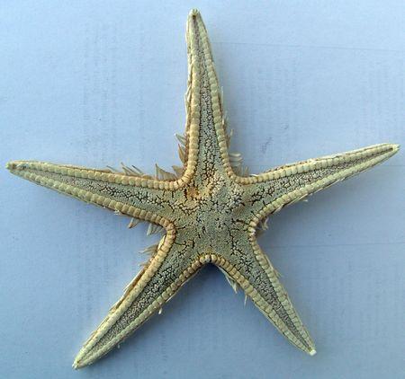 sea star Stock Photo - 563996