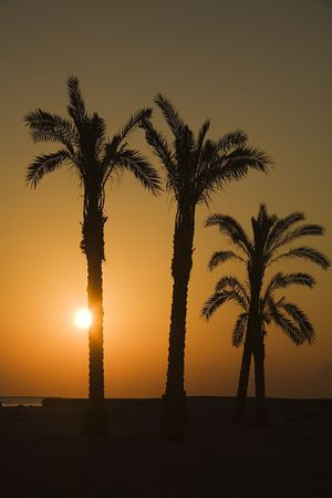 sunset  near Oasis in Sahara, in Africa Stock Photo - 650154