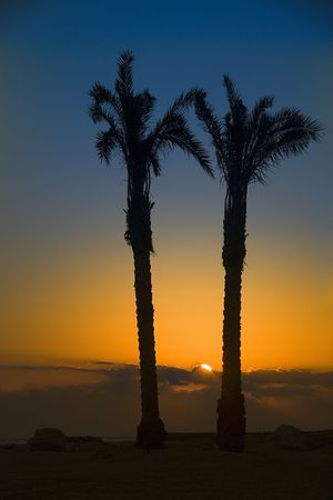 two palm and sunset in oasis. Egypt, Africa. Stock Photo