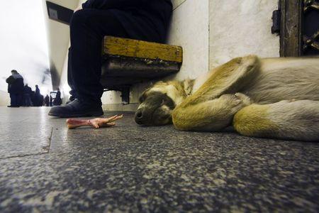 station m�tro: chien sans-abri dans la station de m�tro