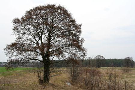 alder: Alder in the field