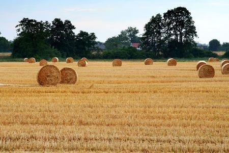 Afetr harvest photo