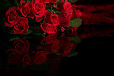 rosas negras: Rosa roja sobre un fondo negro