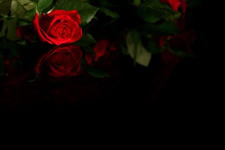 Red rose on a black background Stock Photo - 703453