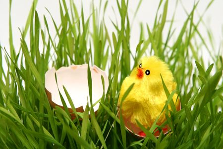 Yellow easter chicken toys on a white background photo