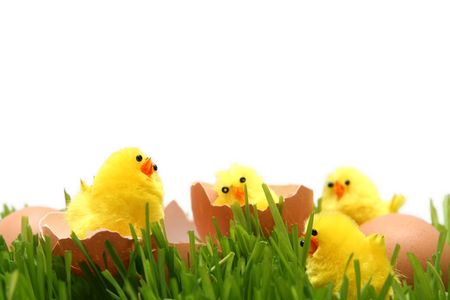 Yellow easter chicken toys on a white background