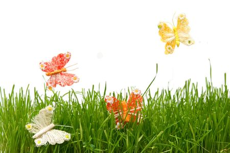 Colorful butterflies in the grass on a white background Stock Photo
