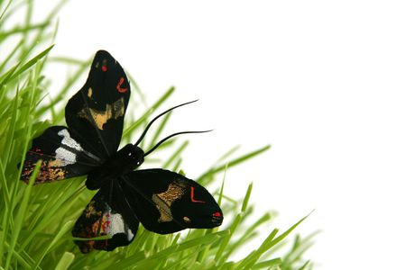 Black butterfly in the grass on a white background