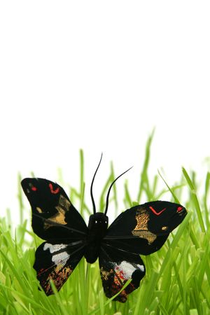 Black butterfly in the grass on a white background photo