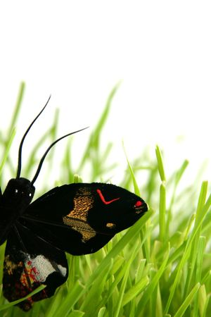 Black butterfly in the grass on a white background Stock Photo - 799816