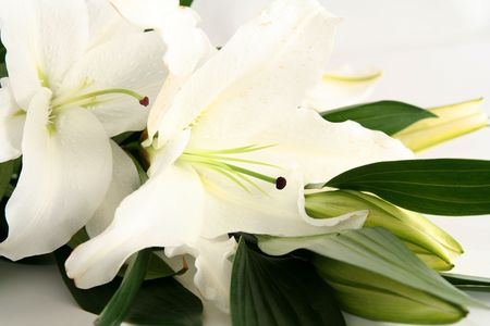 White esater lilies on a white background Stock Photo - 846983