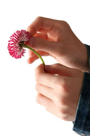 Hands of young girl in a jeans jacket pulling daisy petals photo