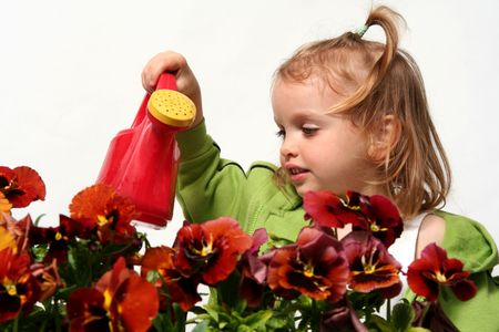 Beautiful little   girl and  red  pansy flowers Stock Photo