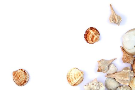 bordered: Different shells isolated on a white background