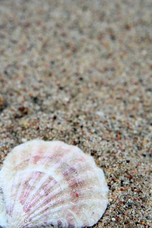 helix border: Different shells on a sand beach background