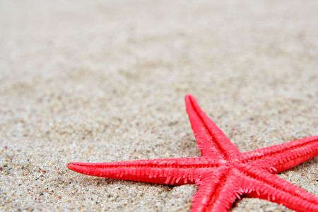 molusk: Red starfish on a sand beach background Stock Photo