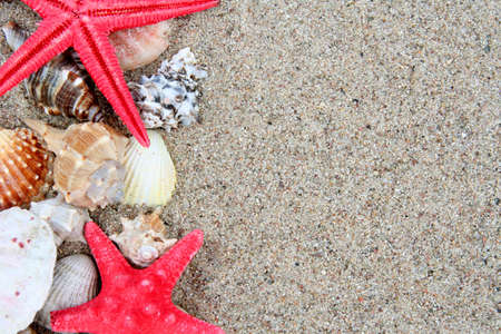 Different shells on a sand beach background Stock Photo - 1165379