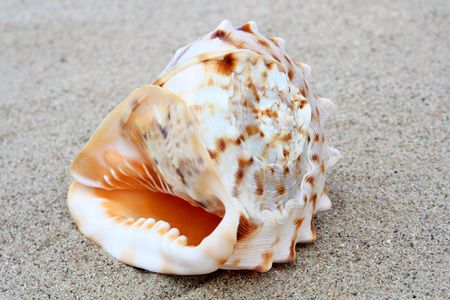 mussle: Different shells on a sand beach background