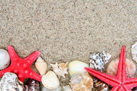 Different shells on a sand beach background photo