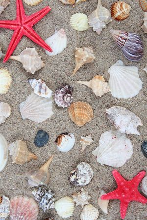molusk: Different shells on a sand beach background