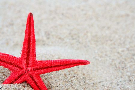 Red starfish on a sand beach background Stock Photo