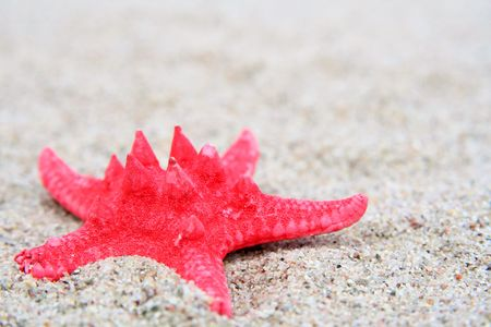 helix border: Red starfish on a sand beach background Stock Photo