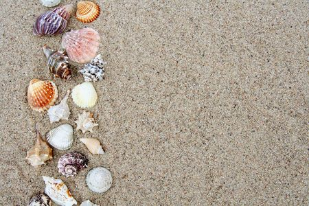 bordered: Different shells on a sand beach background