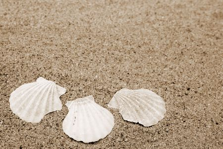 mussle: Different shells on a sand beach background. Sepia Stock Photo