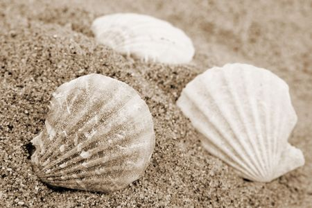 Different shells on a sand beach background. Sepia Stock Photo