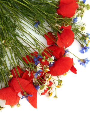 Poppies, cornflowers and chamomiles on a white background photo