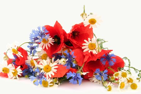 Poppies, cornflowers and chamomiles on a white background Stock Photo