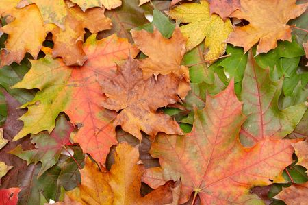 Colorful autumn leaves on a white background Stock Photo - 1998906