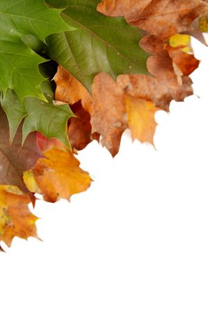 Colorful autumn leaves on a white background Stock Photo - 1998898