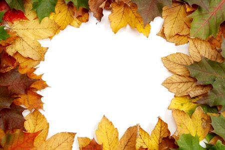 Colorful autumn leaves on a white background Stock Photo - 1998903