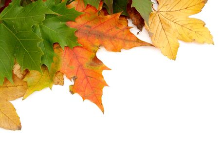 Colorful autumn leaves on a white background Stock Photo - 1998901