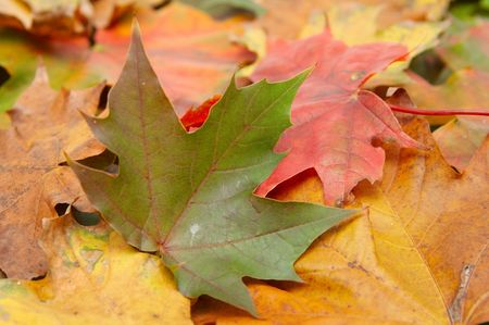 Colorful autumnal leaves on a white background Stock Photo - 2066729