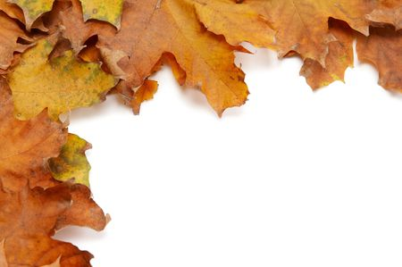 Colorful autumnal leaves on a white background Stock Photo - 2066726