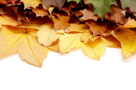 Colorful autumnal leaves on a white background Stock Photo