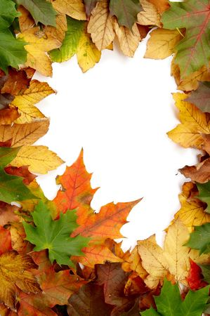 Colorful autumnal leaves on a white background Stock Photo - 2066731