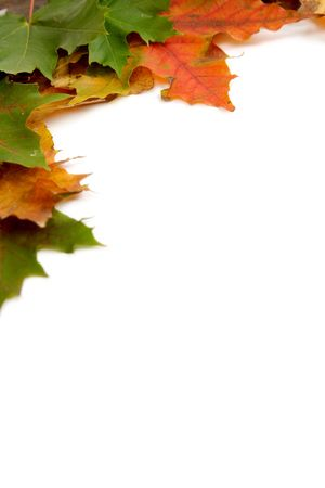 Colorful autumnal leaves on a white background Stock Photo - 2066715